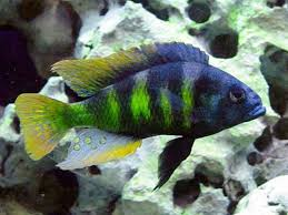 lakevicfish